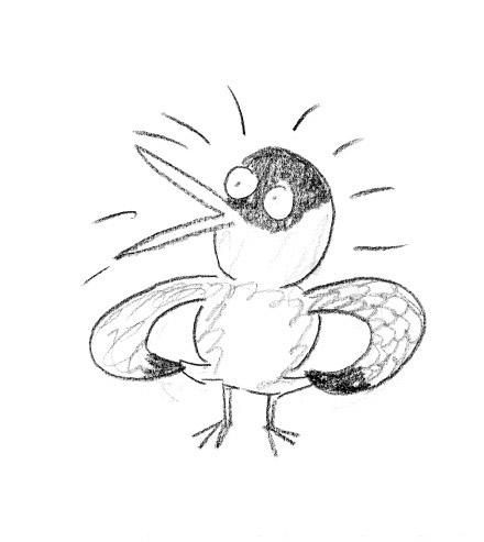 tern-sketch4